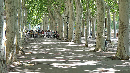 Platane trees in Narbonne ©2011 Marlane O'Neill.  All rights reserved.
